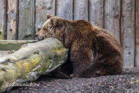 zoopark-mjunhena-oficial'nyj-sajt