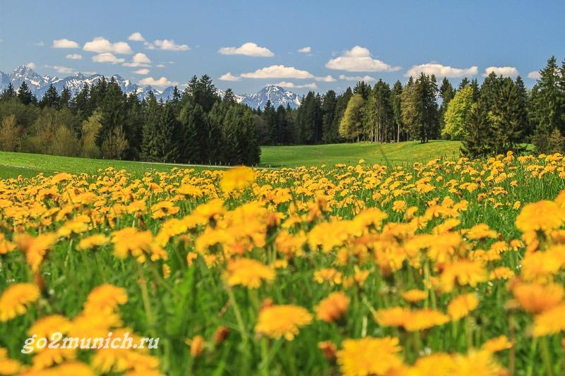 priroda-i-zamki-bavarii