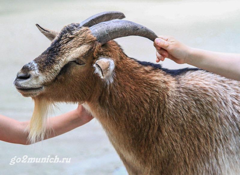 zoopark-hellabrunn-v-mjunhene