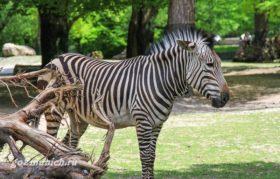Мюнхен зоопарк с детьми