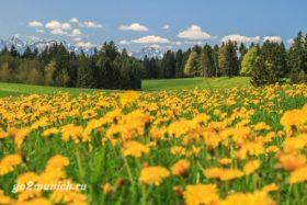 Природа Баварии фото